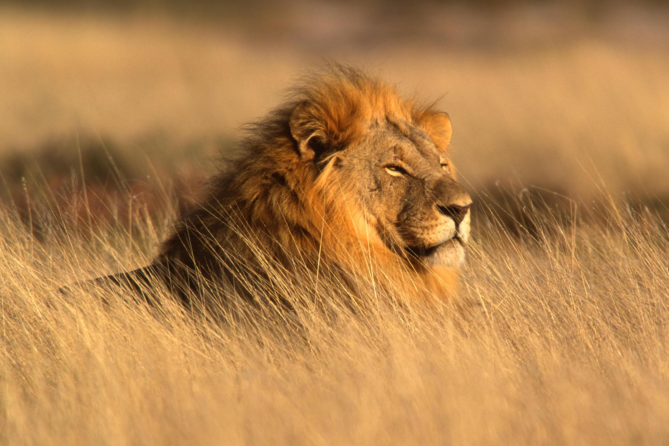 löwe passt zu welchem sternzeichen